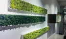 Living Moss tiles from Benetti Moss